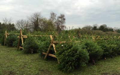 Grappenhall Christmas Trees – Season Updates